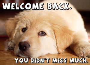 WelcomeBackPooch